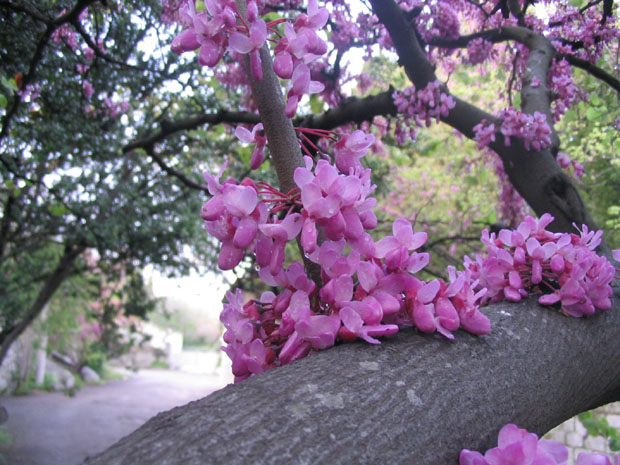 Большие деревья  с цветами 161