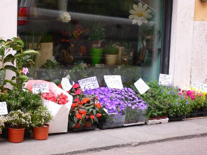 Дубки цветы к чему снятся комнатные